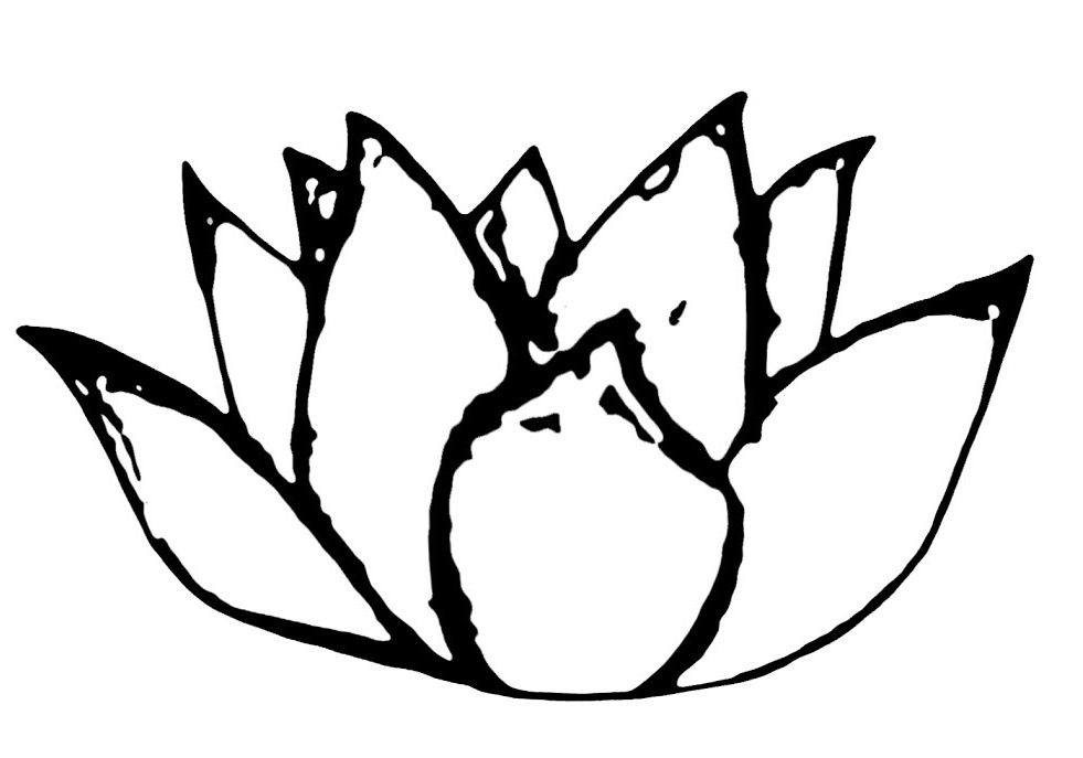 The Lotus Chronicles